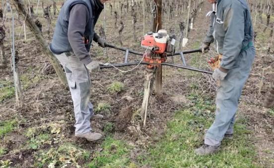 Cette semaine nous réparons le vignoble !